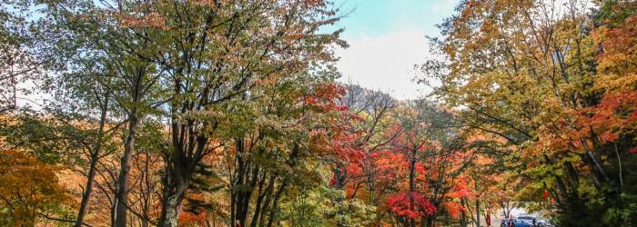 層雲峽紅葉谷紅葉