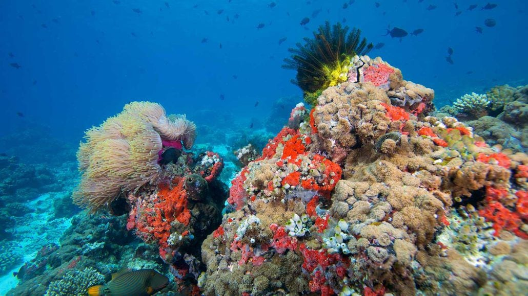 Coral_Reef_Maldives-1030x579